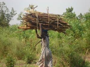 1. Women Gathering Fuelwood