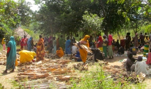 Women gathering cooking fuel in Sherkole Camp.