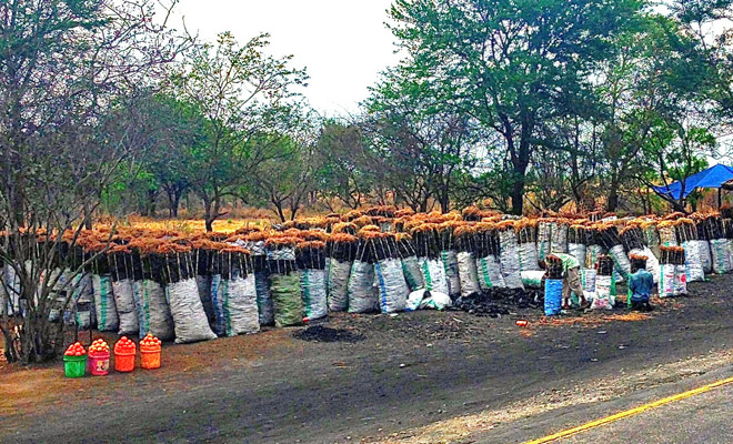 deforestation in tanzania threatens the future of forests project gaia